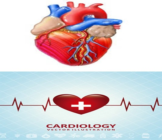 Cardiologist Heart Specialist Doctor